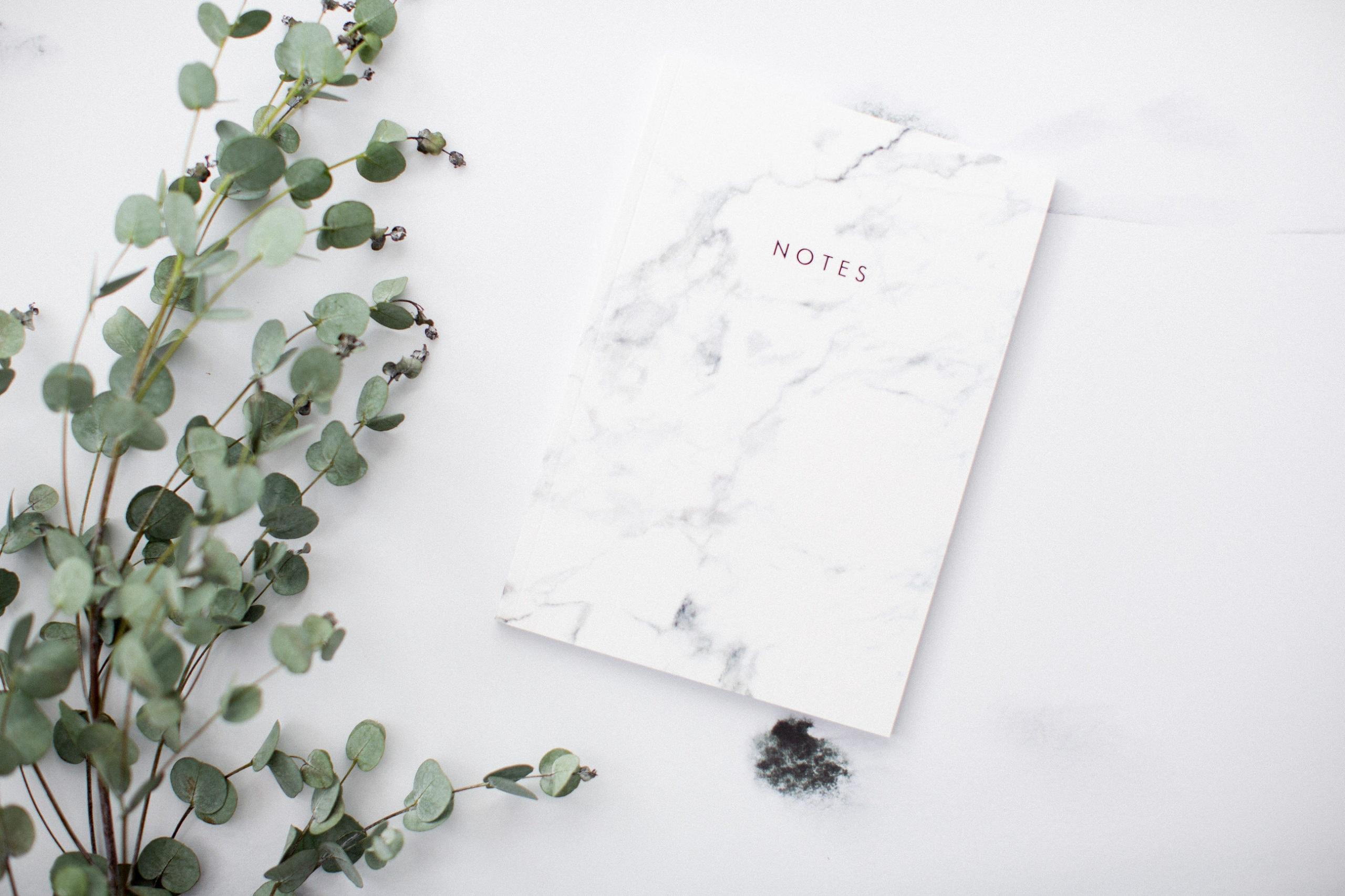 eucalyptus with notebook