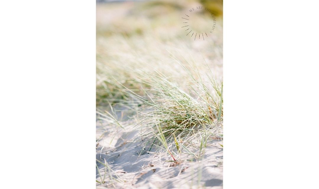 grass on sand dunes stock photo