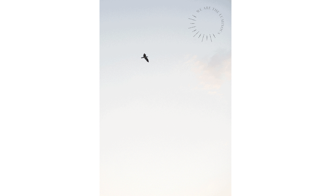 bird flying in sky stock photo