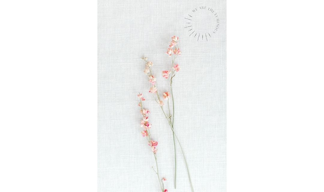 pink flowers stock