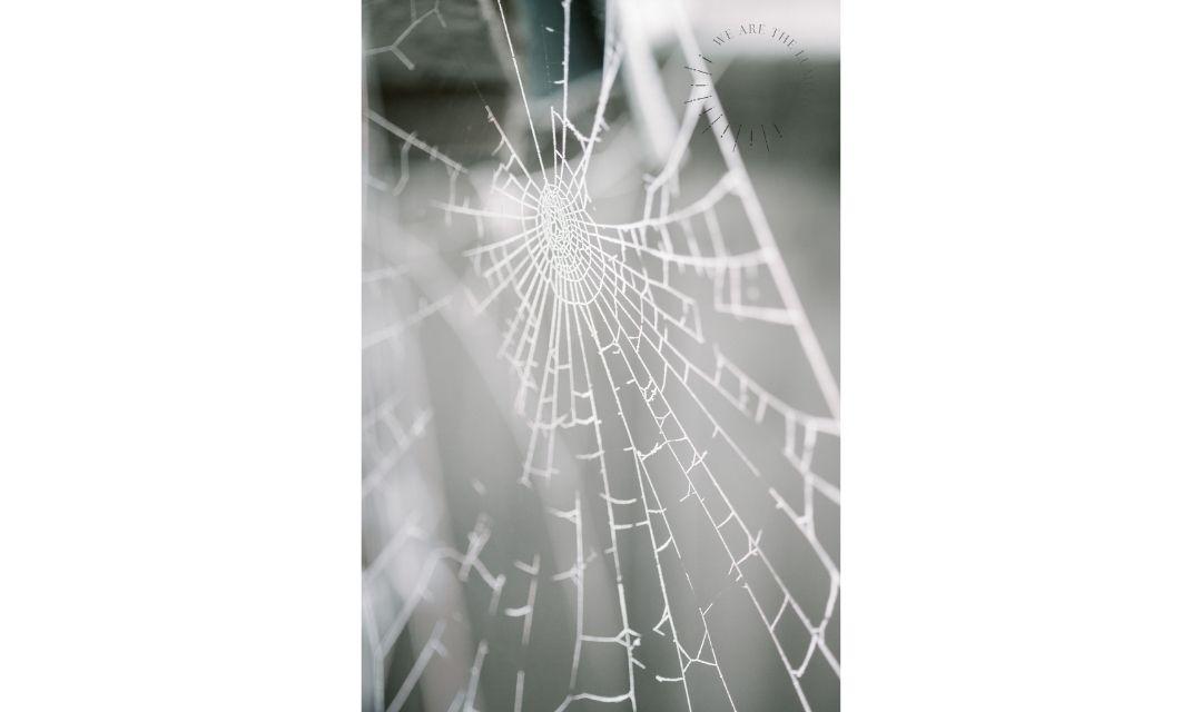 frosty spidersweb