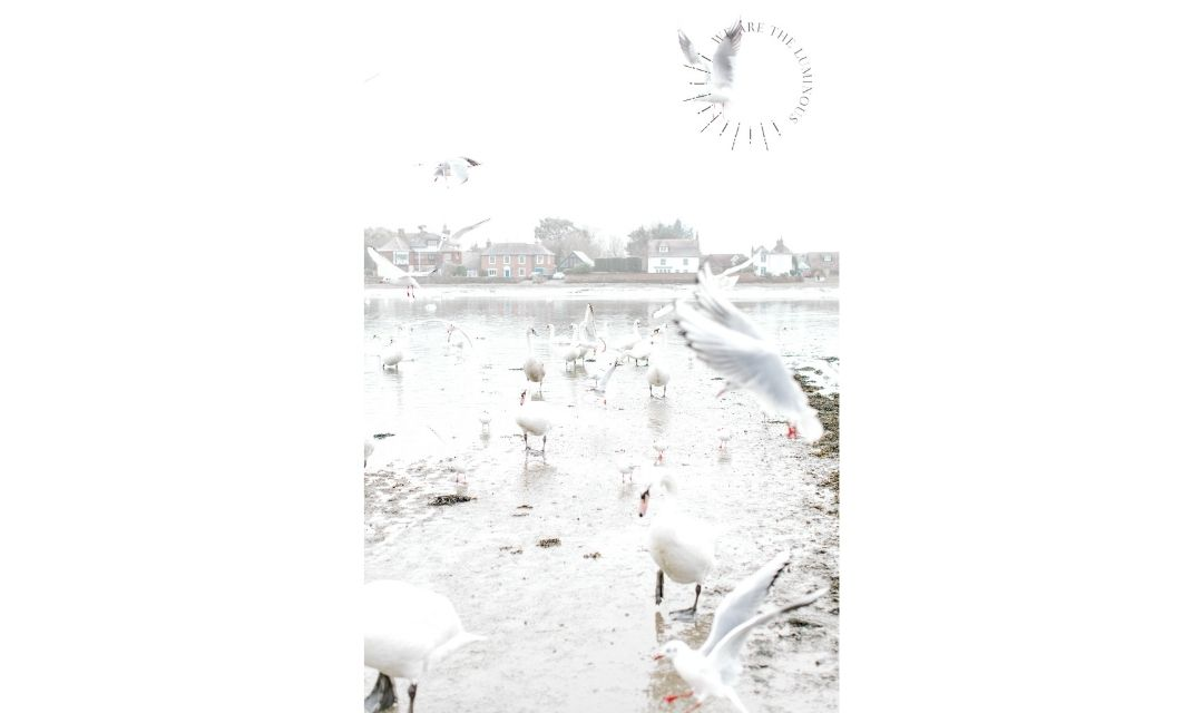 gulls and swans in harbour