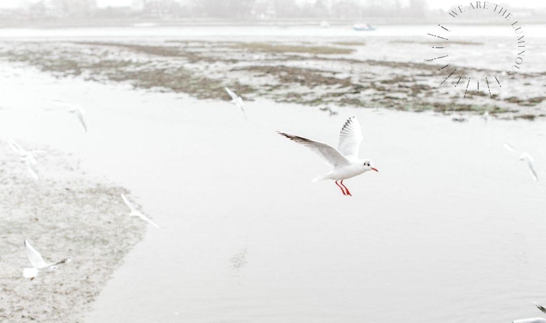 gull flying on winter day