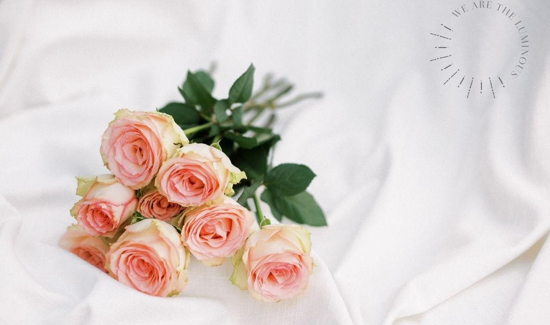 pink Valentine's Day roses